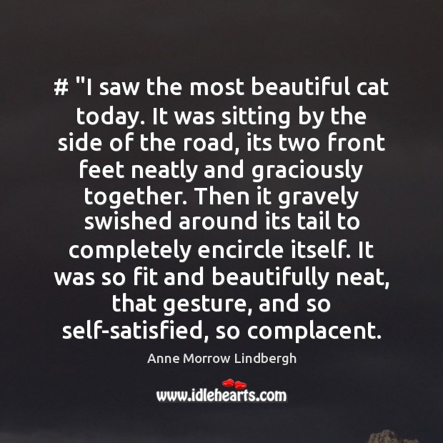 """# """"I saw the most beautiful cat today. It was sitting by the Image"""
