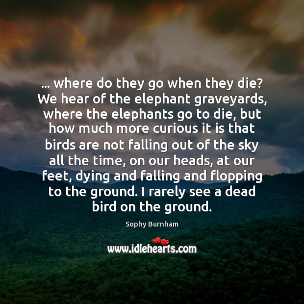 … where do they go when they die? We hear of the elephant Image