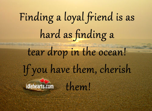Finding A Loyal Friend Is As Hard