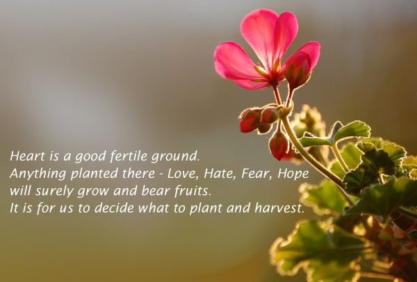 Heart Is A Good Fertile Ground. Anything Planted There…