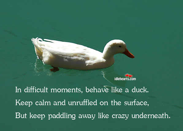 In Difficult Moments, Behave Like A Duck. Keep Calm…