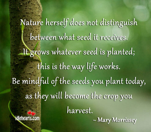 Nature herself does not distinguish between what seed it receives.… Mary Morrissey Picture Quote