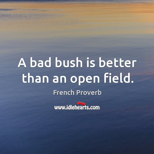 A bad bush is better than an open field. French Proverbs Image