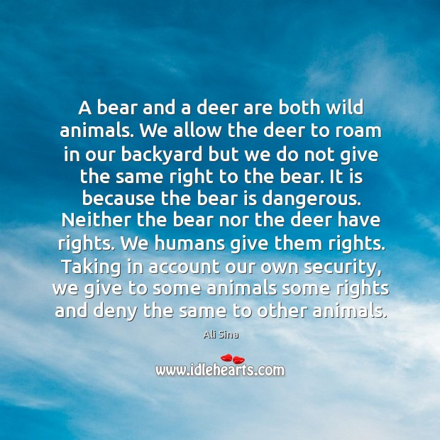 A bear and a deer are both wild animals. We allow the Image