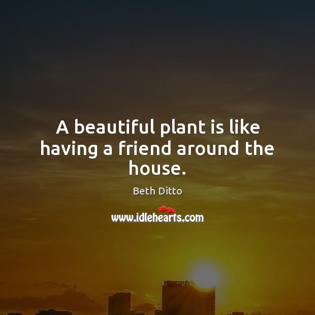 A beautiful plant is like having a friend around the house. Beth Ditto Picture Quote