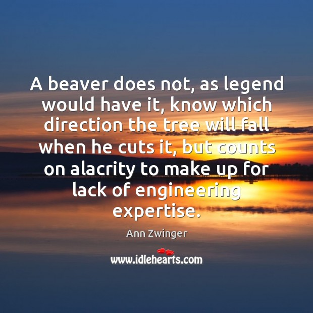 Image, A beaver does not, as legend would have it, know which direction