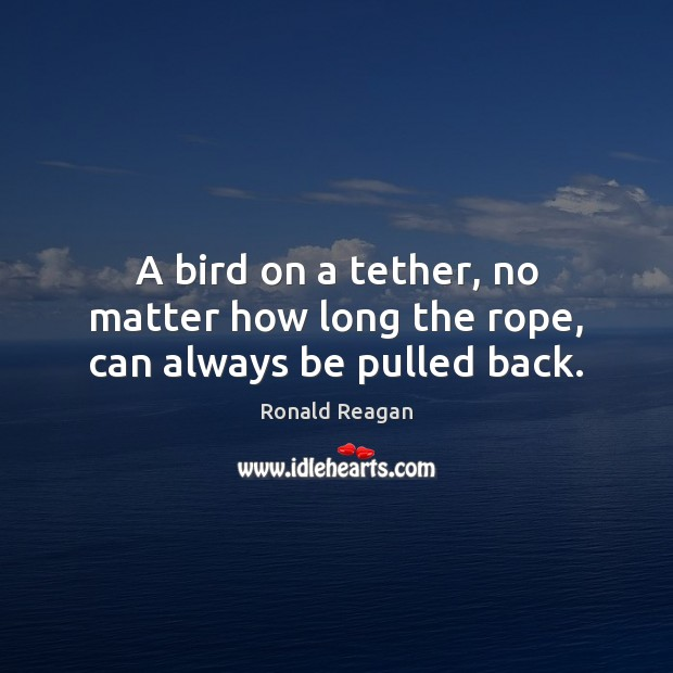 Image, A bird on a tether, no matter how long the rope, can always be pulled back.