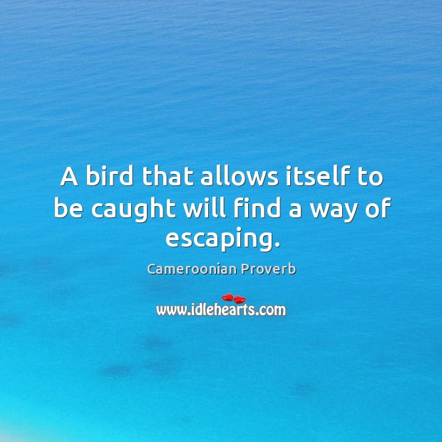 A bird that allows itself to be caught will find a way of escaping. Cameroonian Proverbs Image