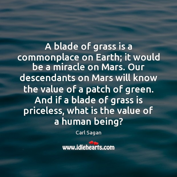 Image, A blade of grass is a commonplace on Earth; it would be