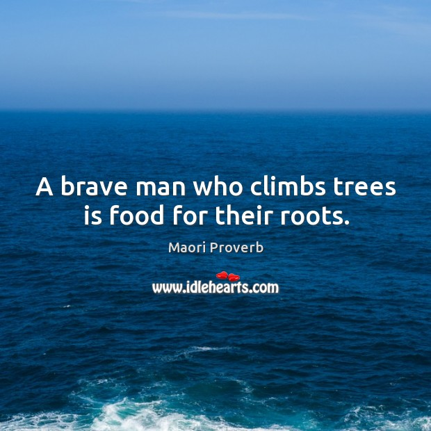 A brave man who climbs trees is food for their roots. Maori Proverbs Image