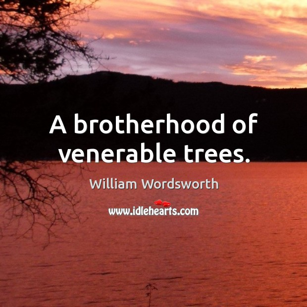 A brotherhood of venerable trees. William Wordsworth Picture Quote