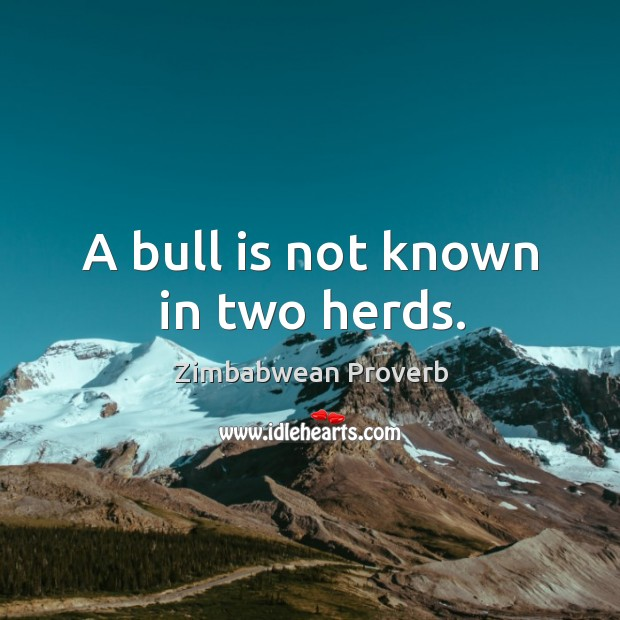A bull is not known in two herds. Zimbabwean Proverbs Image