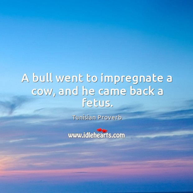 A bull went to impregnate a cow, and he came back a fetus. Tunisian Proverbs Image