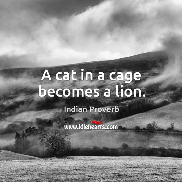 A cat in a cage becomes a lion. Image