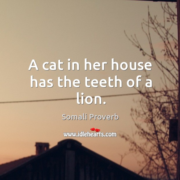Image, A cat in her house has the teeth of a lion.