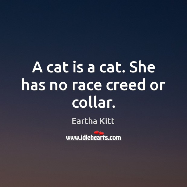 A cat is a cat. She has no race creed or collar. Image