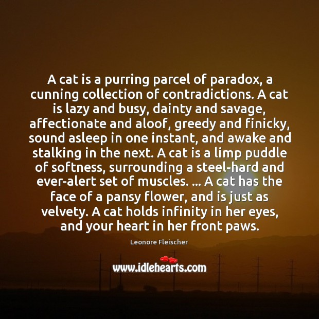 A cat is a purring parcel of paradox, a cunning collection of Image