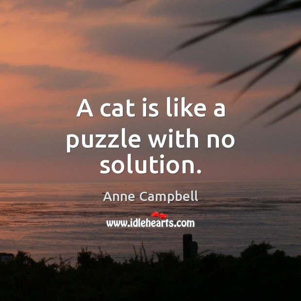 Image, A cat is like a puzzle with no solution.