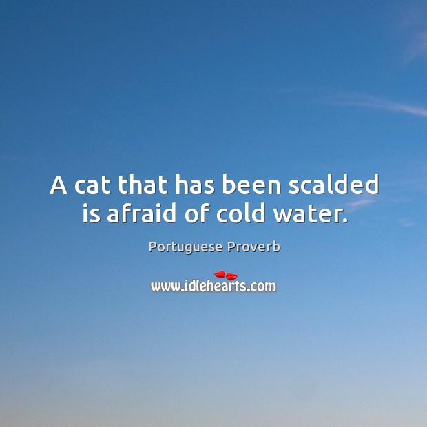 Image, A cat that has been scalded is afraid of cold water.