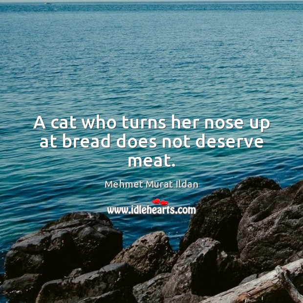 Image, A cat who turns her nose up at bread does not deserve meat.