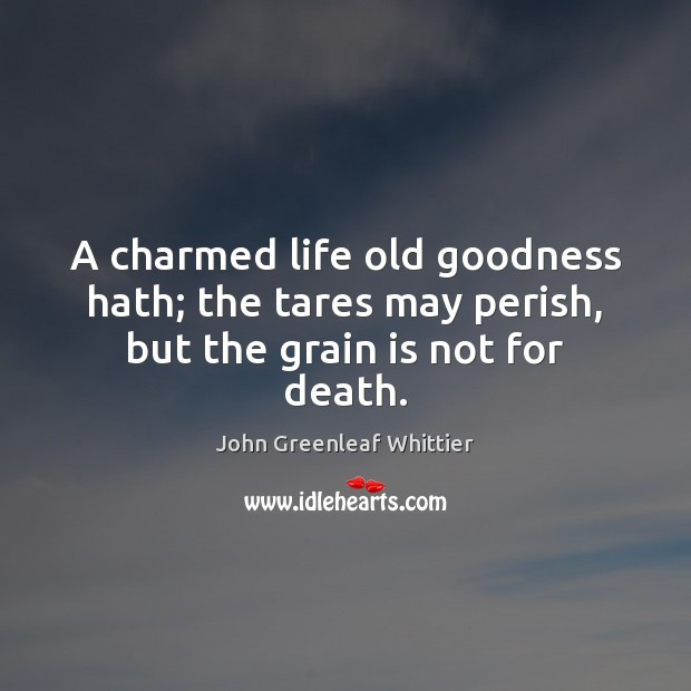 A charmed life old goodness hath; the tares may perish, but the grain is not for death. John Greenleaf Whittier Picture Quote