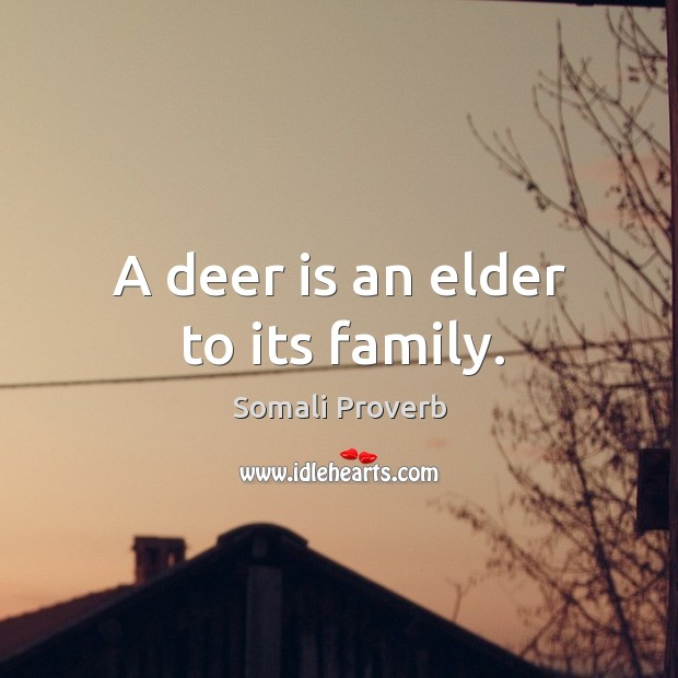 Image, A deer is an elder to its family.
