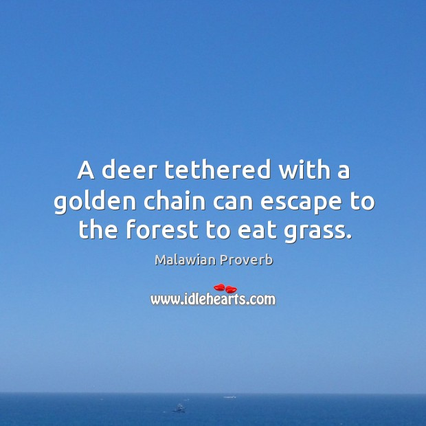 A deer tethered with a golden chain can escape to the forest to eat grass. Malawian Proverbs Image