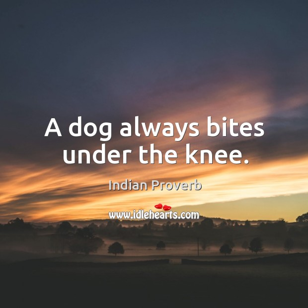 A dog always bites under the knee. Image