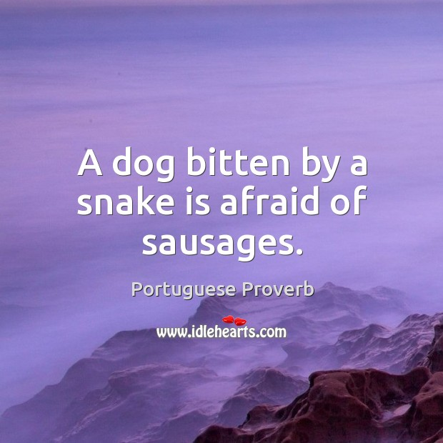 Image, A dog bitten by a snake is afraid of sausages.