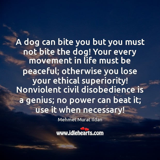 A dog can bite you but you must not bite the dog! Image