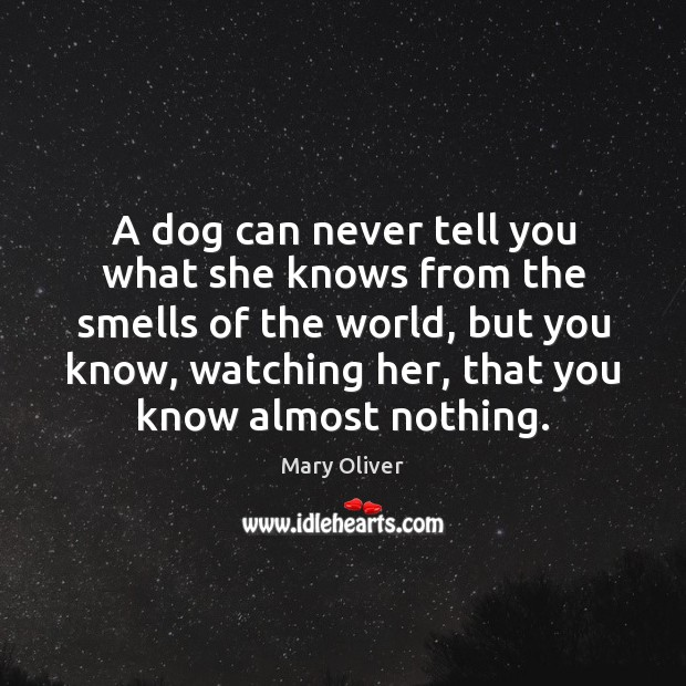 A dog can never tell you what she knows from the smells Mary Oliver Picture Quote