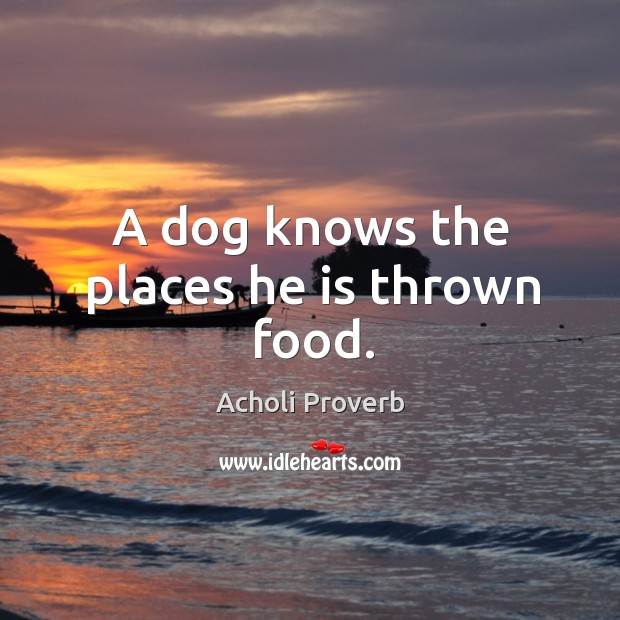 A dog knows the places he is thrown food. Acholi Proverbs Image