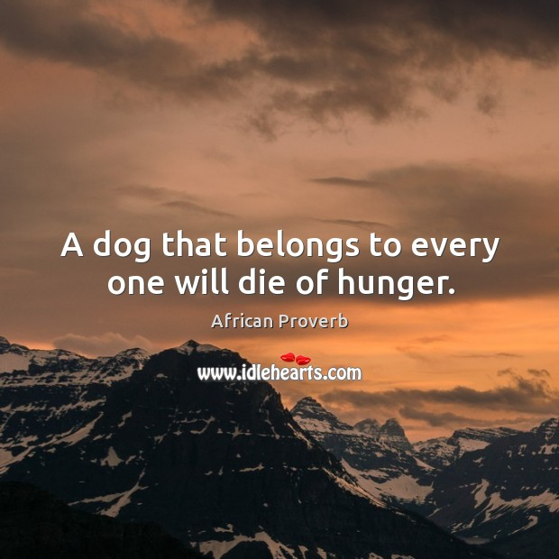 Image, A dog that belongs to every one will die of hunger.