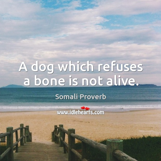 A dog which refuses a bone is not alive. Somali Proverbs Image
