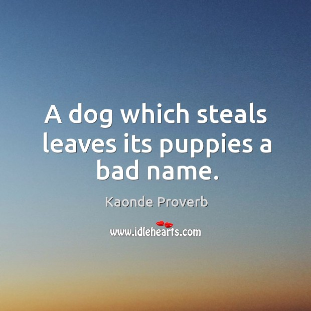 A dog which steals leaves its puppies a bad name. Kaonde Proverbs Image
