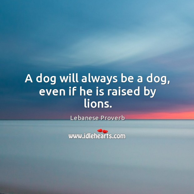 A dog will always be a dog, even if he is raised by lions. Lebanese Proverbs Image