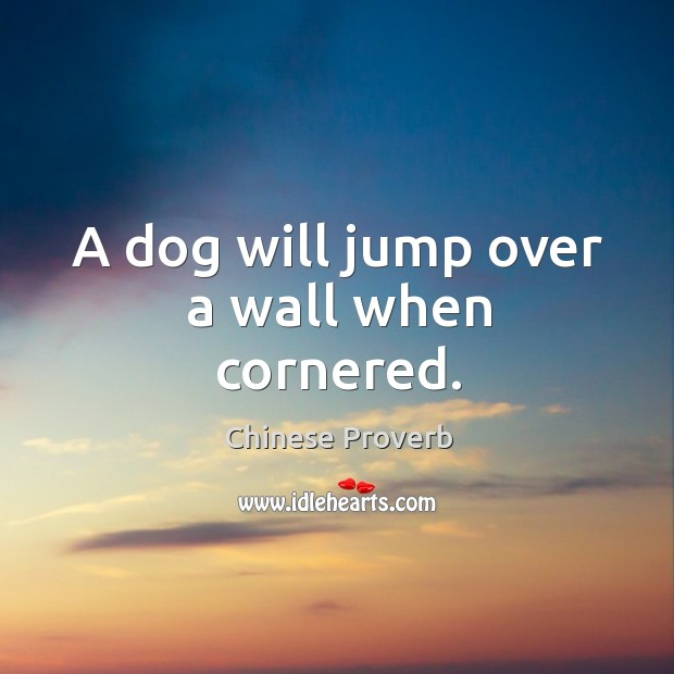 Image, A dog will jump over a wall when cornered.