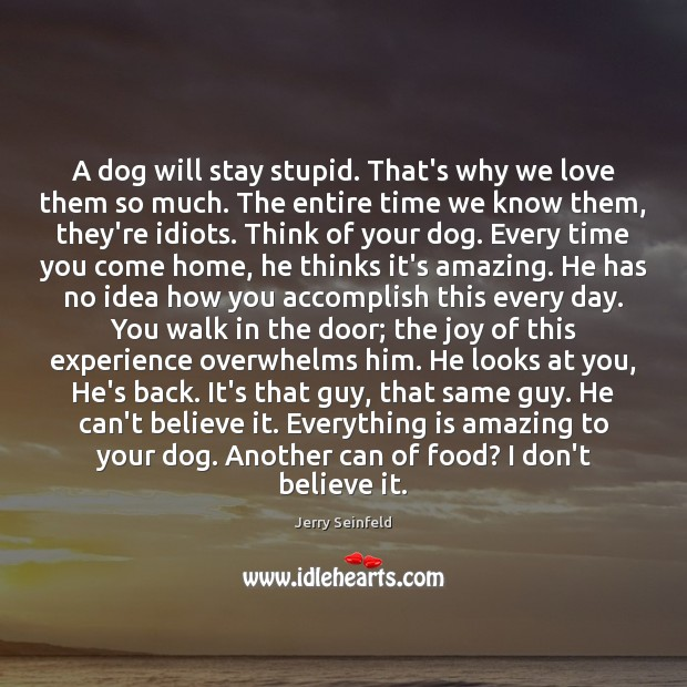A dog will stay stupid. That's why we love them so much. Jerry Seinfeld Picture Quote