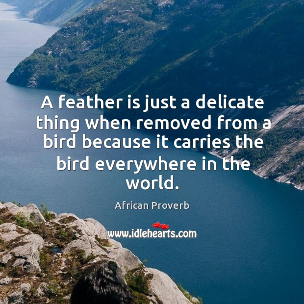Image, A feather is just a delicate thing when removed from a bird because