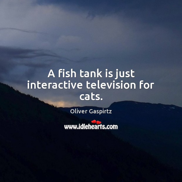 Image, A fish tank is just interactive television for cats.