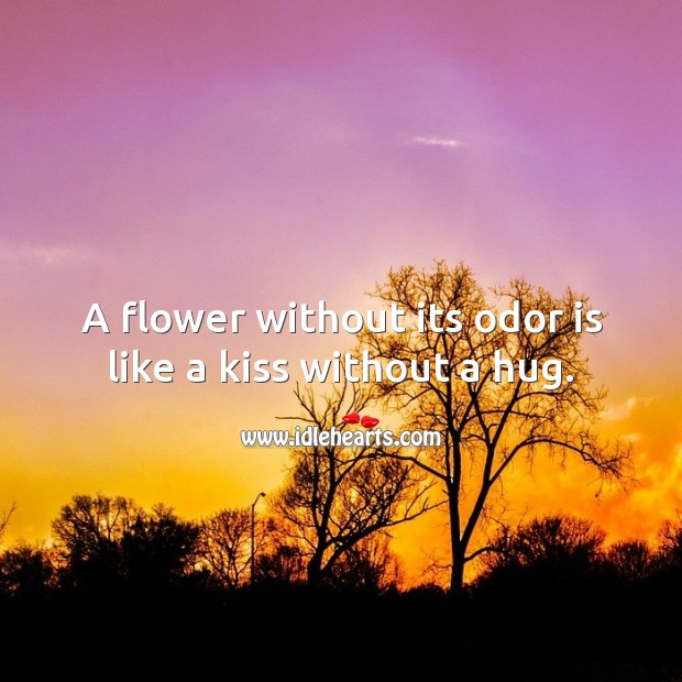 A flower without its odor is like a kiss without a hug. Hug Quotes Image