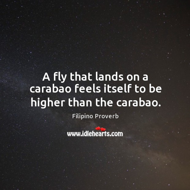 A fly that lands on a carabao feels itself to be higher than the carabao. Filipino Proverbs Image