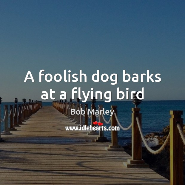 Image, A foolish dog barks at a flying bird