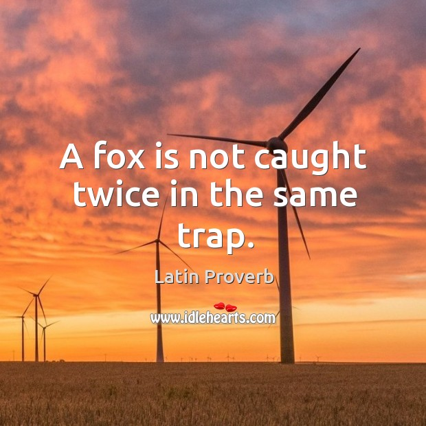Image, A fox is not caught twice in the same trap.