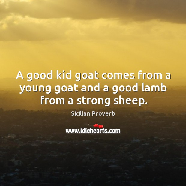 A good kid goat comes from a young goat and a good lamb Image