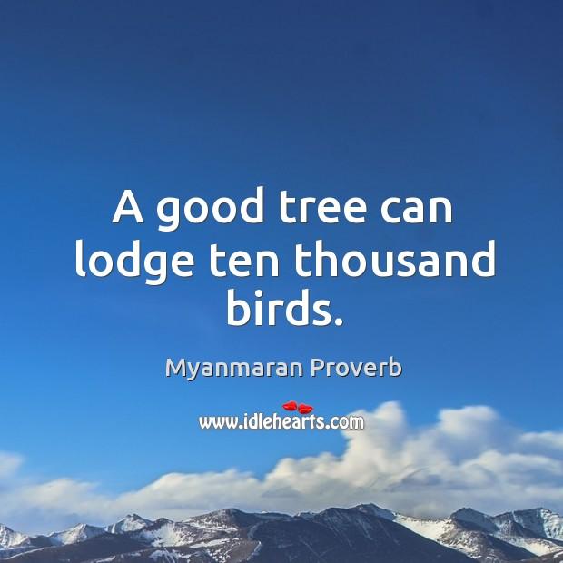 A good tree can lodge ten thousand birds. Myanmaran Proverbs Image