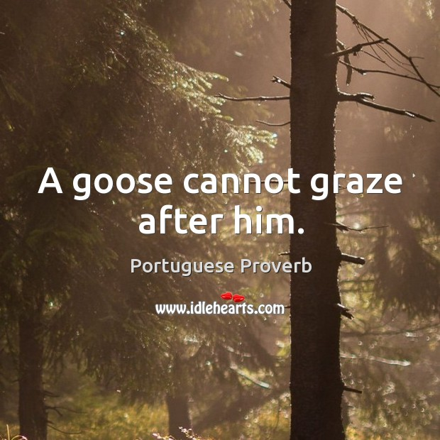 A goose cannot graze after him. Image