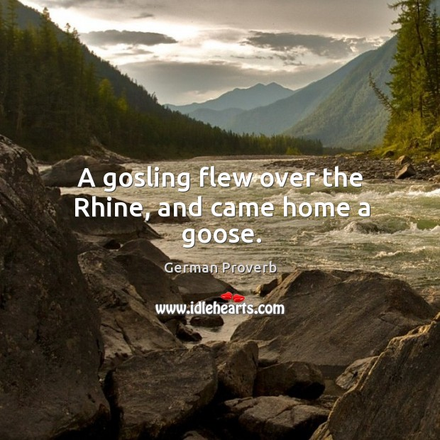 A gosling flew over the rhine, and came home a goose. German Proverbs Image