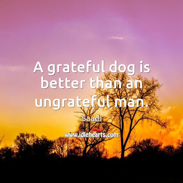 A grateful dog is better than an ungrateful man. Saadi Picture Quote