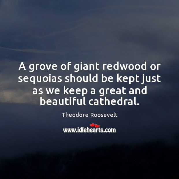 A grove of giant redwood or sequoias should be kept just as Image